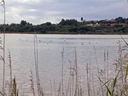 Flamingos_at_Villasimius.jpg