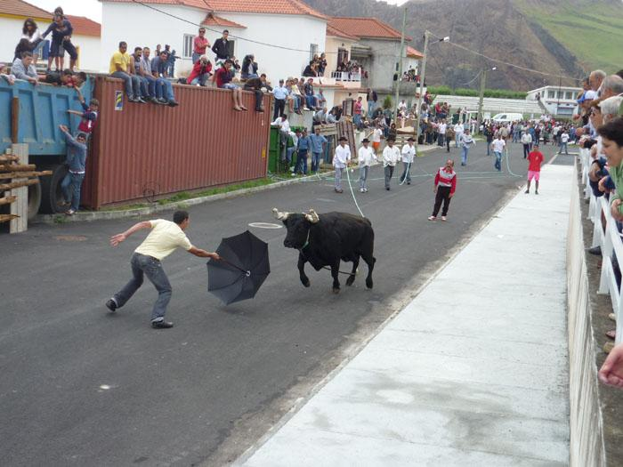 Running_bulls_in_the_street_Sao_Jorge.jpg