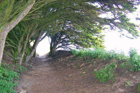 Windswept_Trees.jpg